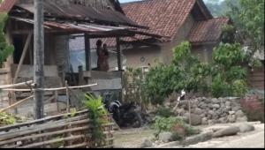 Seorang Tuna Rungu Dan Tuna Wicara, Lahirkan Tiga Anak di Pekon Banjar Negeri.