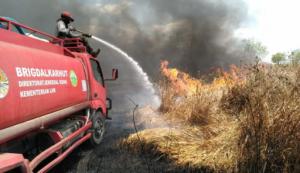 Pembukaan Festival Way Kambas Di Warnai Kebakaran Akibat Kemarau