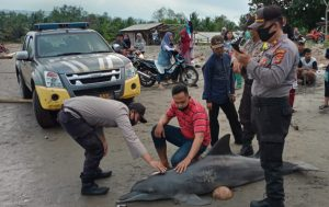 Hewan yang Menjadi Maskot Kabupaten Tanggamus itu Akhirnya Mati Terdampar..